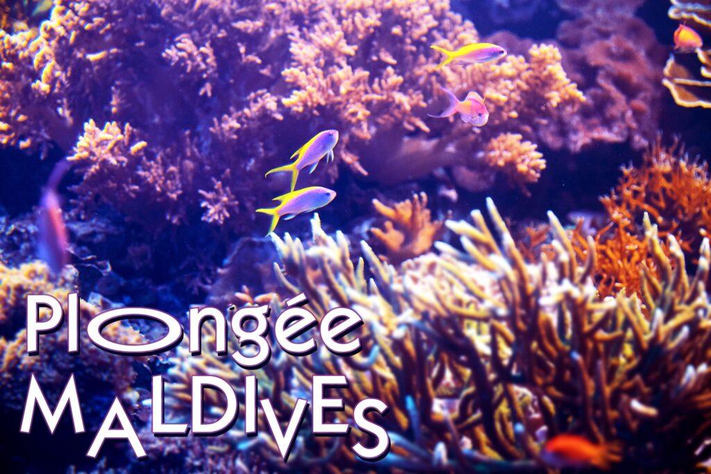 PlongeeMaldives